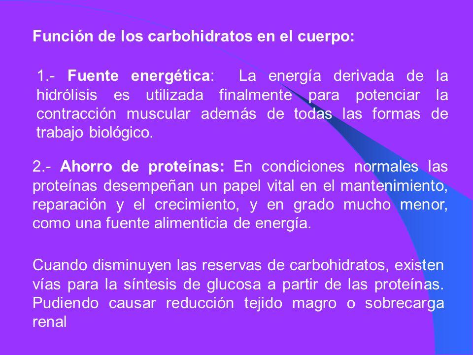 Función de los carbohidratos en el cuerpo: 1.- Fuente energética: La energía derivada de la hidrólisis es utilizada finalmente para potenciar la contr
