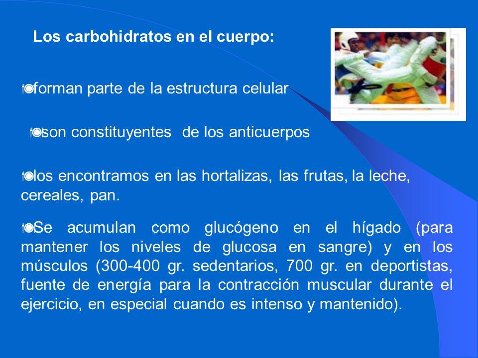Los carbohidratos en el cuerpo: forman parte de la estructura celular son constituyentes de los anticuerpos los encontramos en las hortalizas, las fru