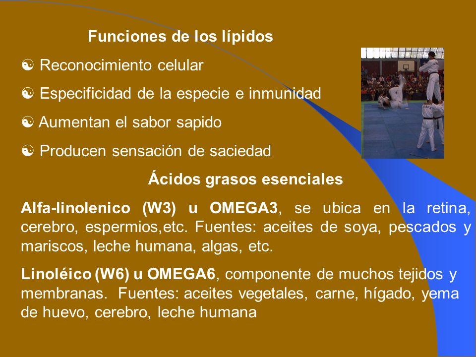Funciones de los lípidos Reconocimiento celular Especificidad de la especie e inmunidad Aumentan el sabor sapido Producen sensación de saciedad Ácidos