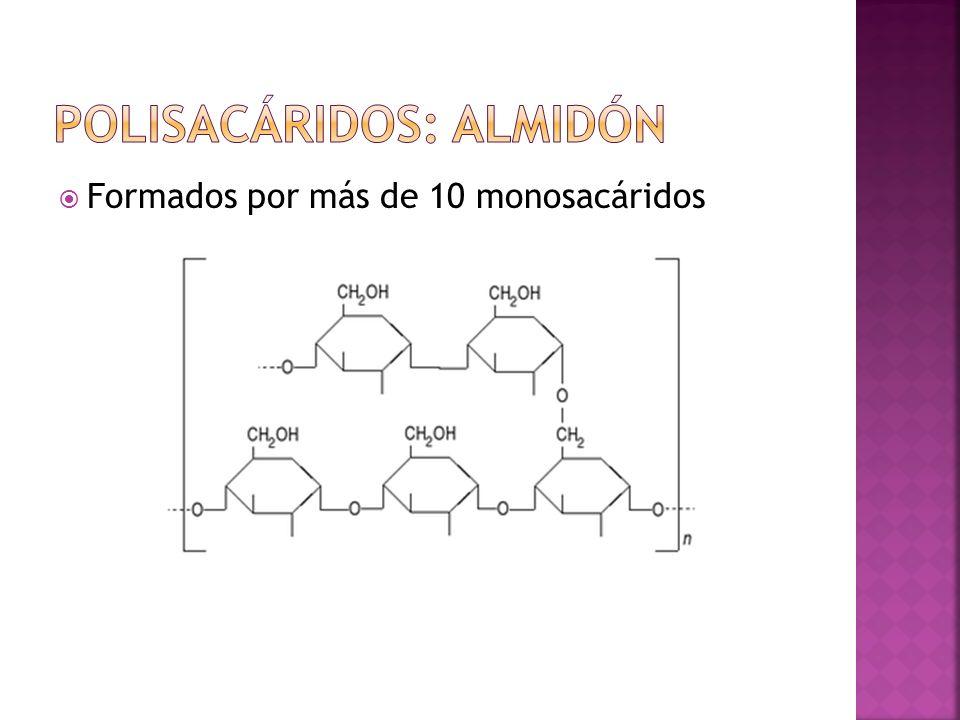 Formados por más de 10 monosacáridos