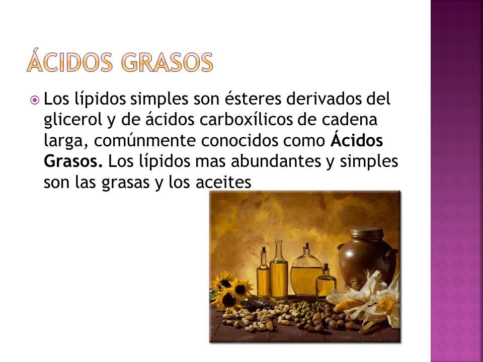 Los lípidos simples son ésteres derivados del glicerol y de ácidos carboxílicos de cadena larga, comúnmente conocidos como Ácidos Grasos. Los lípidos