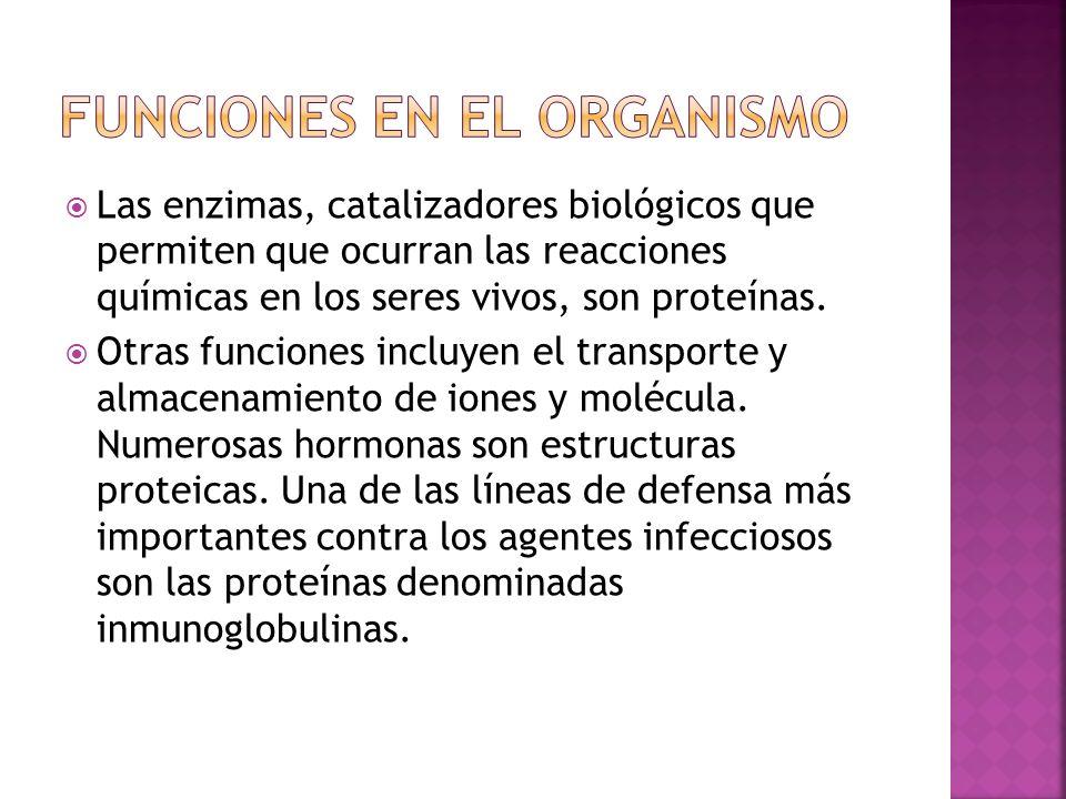 Las enzimas, catalizadores biológicos que permiten que ocurran las reacciones químicas en los seres vivos, son proteínas. Otras funciones incluyen el