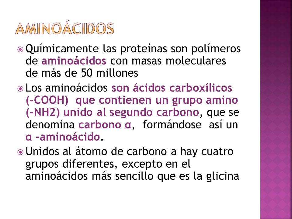 Químicamente las proteínas son polímeros de aminoácidos con masas moleculares de más de 50 millones Los aminoácidos son ácidos carboxílicos (-COOH) qu
