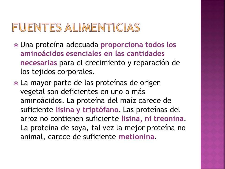 Una proteína adecuada proporciona todos los aminoácidos esenciales en las cantidades necesarias para el crecimiento y reparación de los tejidos corpor