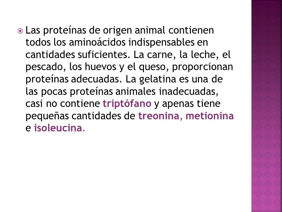 Las proteínas de origen animal contienen todos los aminoácidos indispensables en cantidades suficientes. La carne, la leche, el pescado, los huevos y