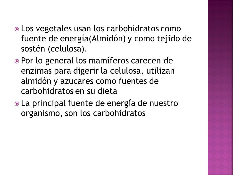 Los vegetales usan los carbohidratos como fuente de energía(Almidón) y como tejido de sostén (celulosa). Por lo general los mamíferos carecen de enzim