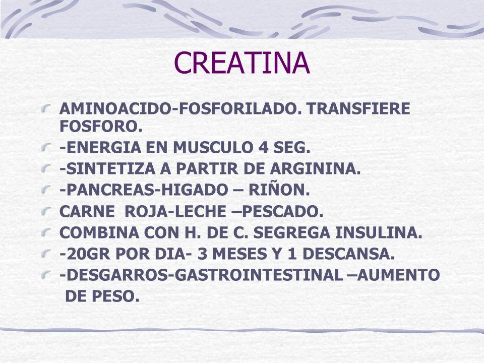 CREATINA AMINOACIDO-FOSFORILADO. TRANSFIERE FOSFORO. -ENERGIA EN MUSCULO 4 SEG. -SINTETIZA A PARTIR DE ARGININA. -PANCREAS-HIGADO – RIÑON. CARNE ROJA-