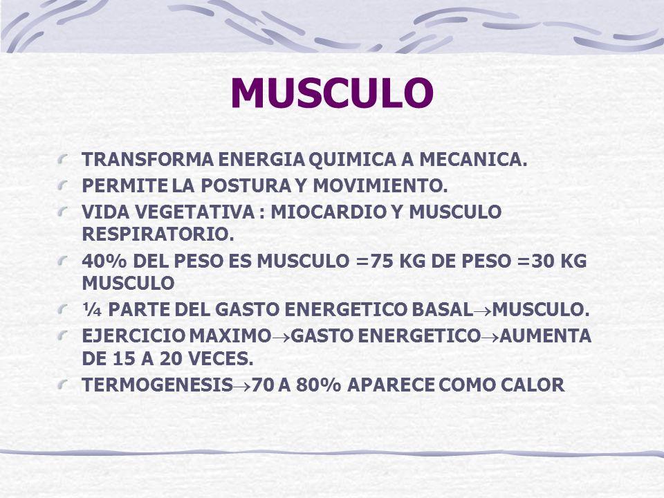 MUSCULO TRANSFORMA ENERGIA QUIMICA A MECANICA. PERMITE LA POSTURA Y MOVIMIENTO. VIDA VEGETATIVA : MIOCARDIO Y MUSCULO RESPIRATORIO. 40% DEL PESO ES MU