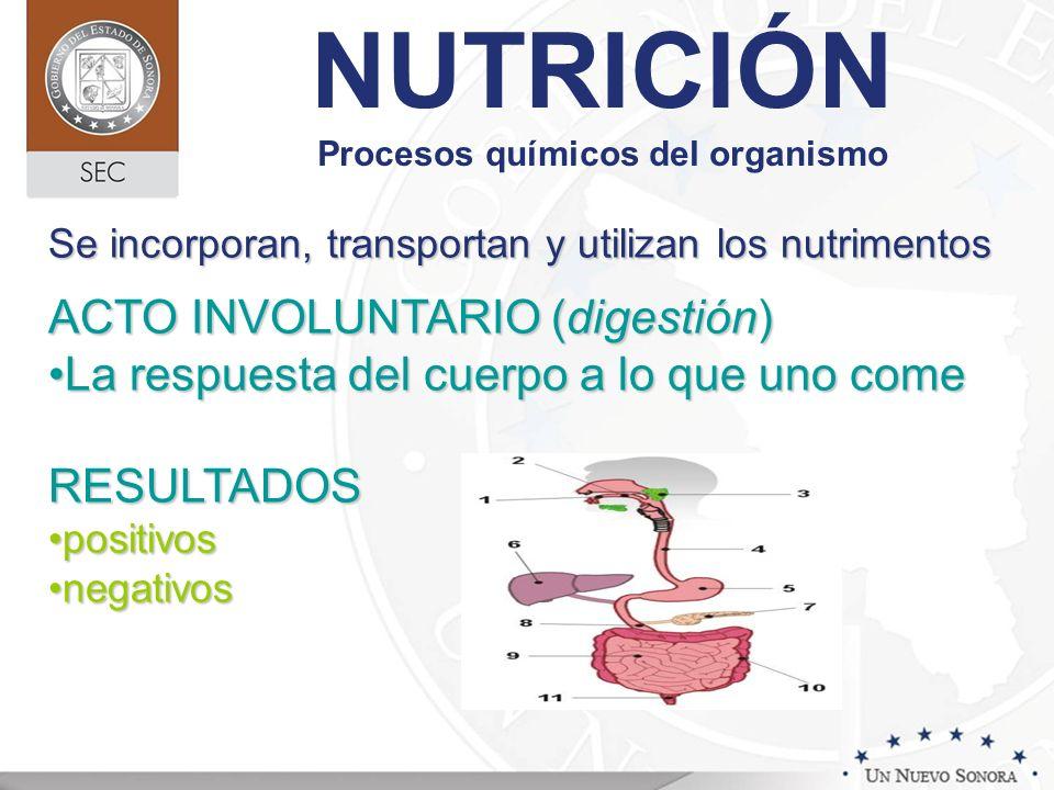 NUTRICIÓN Procesos químicos del organismo Se incorporan, transportan y utilizan los nutrimentos ACTO INVOLUNTARIO (digestión) La respuesta del cuerpo