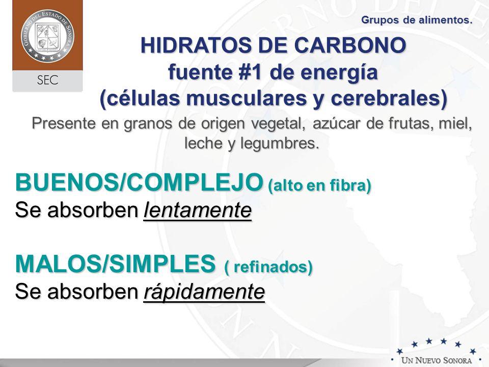 HIDRATOS DE CARBONO fuente #1 de energía (células musculares y cerebrales) BUENOS/COMPLEJO (alto en fibra) Se absorben lentamente MALOS/SIMPLES ( refi