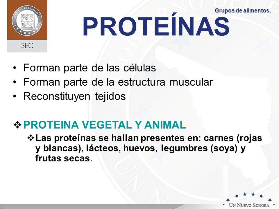 PROTEÍNAS Forman parte de las células Forman parte de la estructura muscular Reconstituyen tejidos PROTEINA VEGETAL Y ANIMAL Las proteínas se hallan p