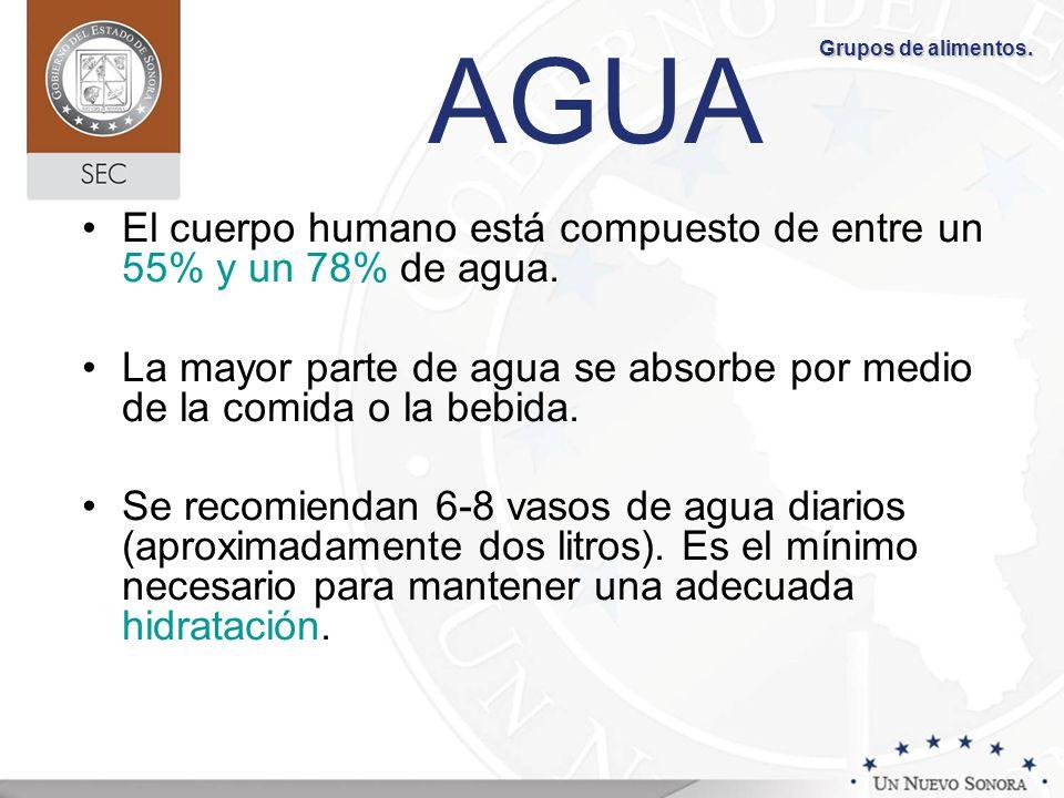 AGUA El cuerpo humano está compuesto de entre un 55% y un 78% de agua. La mayor parte de agua se absorbe por medio de la comida o la bebida. Se recomi