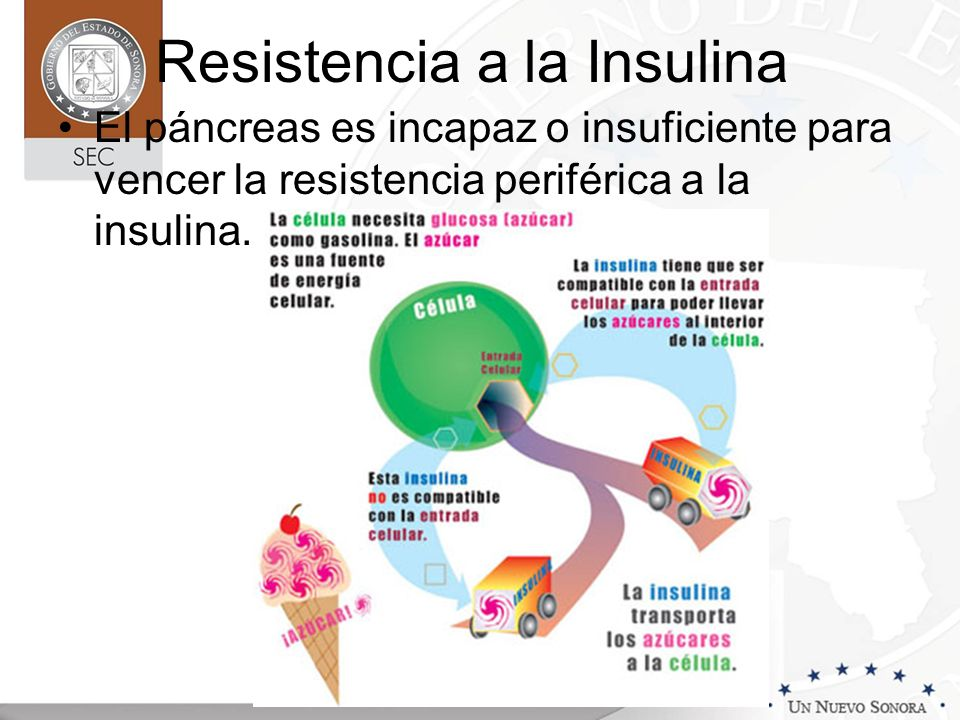 Resistencia a la Insulina El páncreas es incapaz o insuficiente para vencer la resistencia periférica a la insulina.