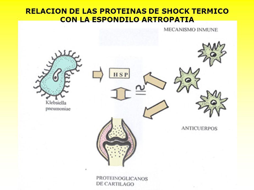 RELACION DE LAS PROTEINAS DE SHOCK TERMICO CON LA ESPONDILO ARTROPATIA