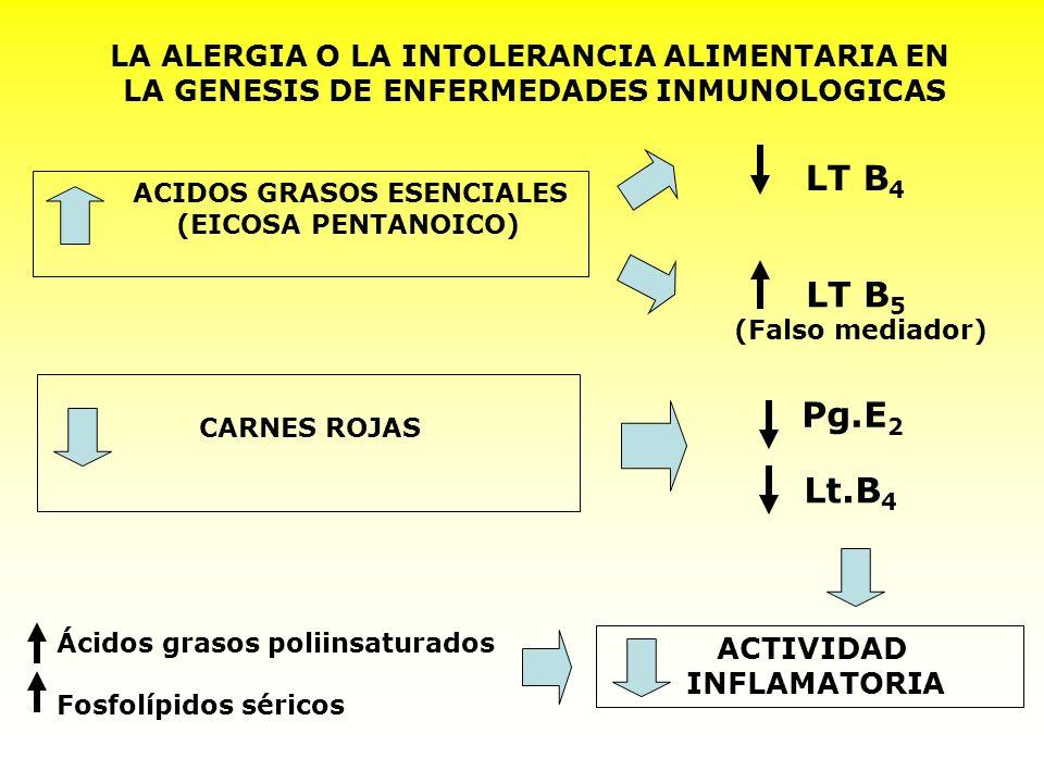 LA ALERGIA O LA INTOLERANCIA ALIMENTARIA EN LA GENESIS DE ENFERMEDADES INMUNOLOGICAS ACIDOS GRASOS ESENCIALES (EICOSA PENTANOICO) CARNES ROJAS ACTIVID