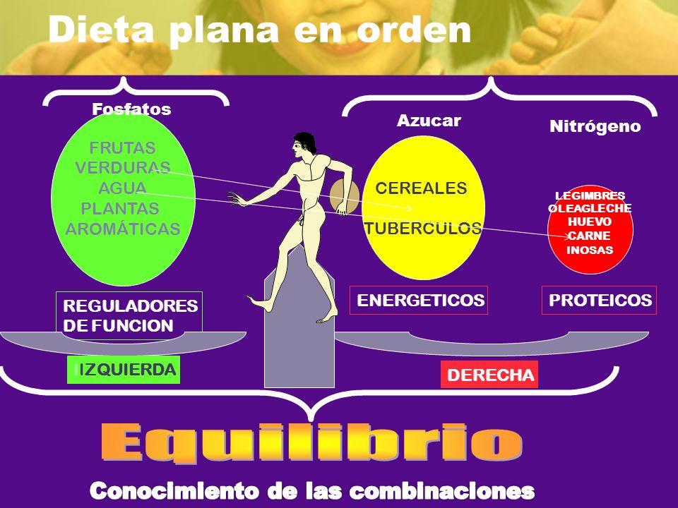 Dieta plana en orden REGULADORES DE FUNCION FRUTAS VERDURAS AGUA PLANTAS AROMÁTICAS CEREALES TUBERCULOS ENERGETICOSPROTEICOS IIZQUIERDA DERECHA LEGIMB