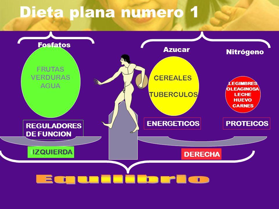 Dieta plana numero 1 REGULADORES DE FUNCION FRUTAS VERDURAS AGUA CEREALES TUBERCULOS ENERGETICOSPROTEICOS IIZQUIERDA DERECHA LEGIMBRES OLEAGINOSA LECH