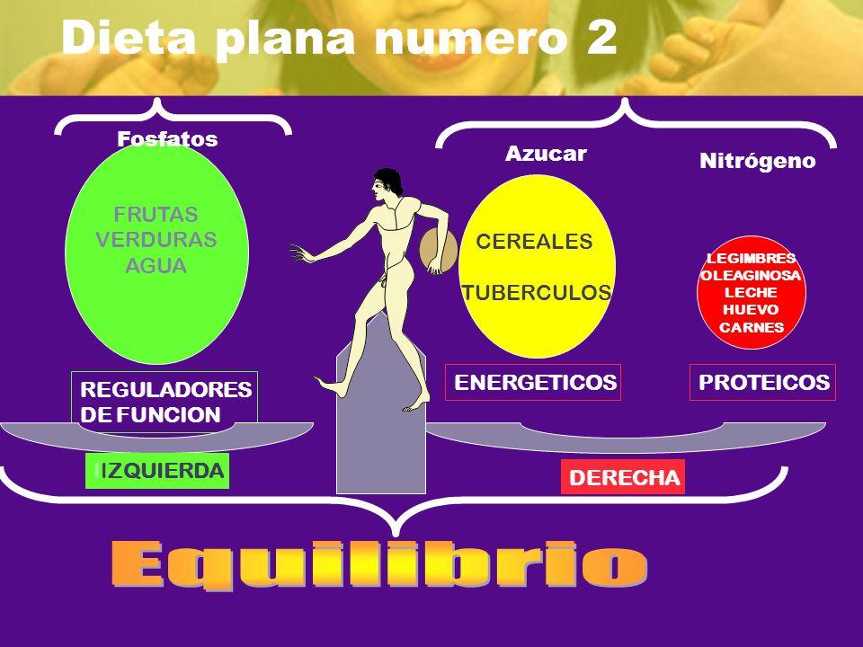 Dieta plana numero 2 REGULADORES DE FUNCION FRUTAS VERDURAS AGUA CEREALES TUBERCULOS ENERGETICOSPROTEICOS IIZQUIERDA DERECHA LEGIMBRES OLEAGINOSA LECH