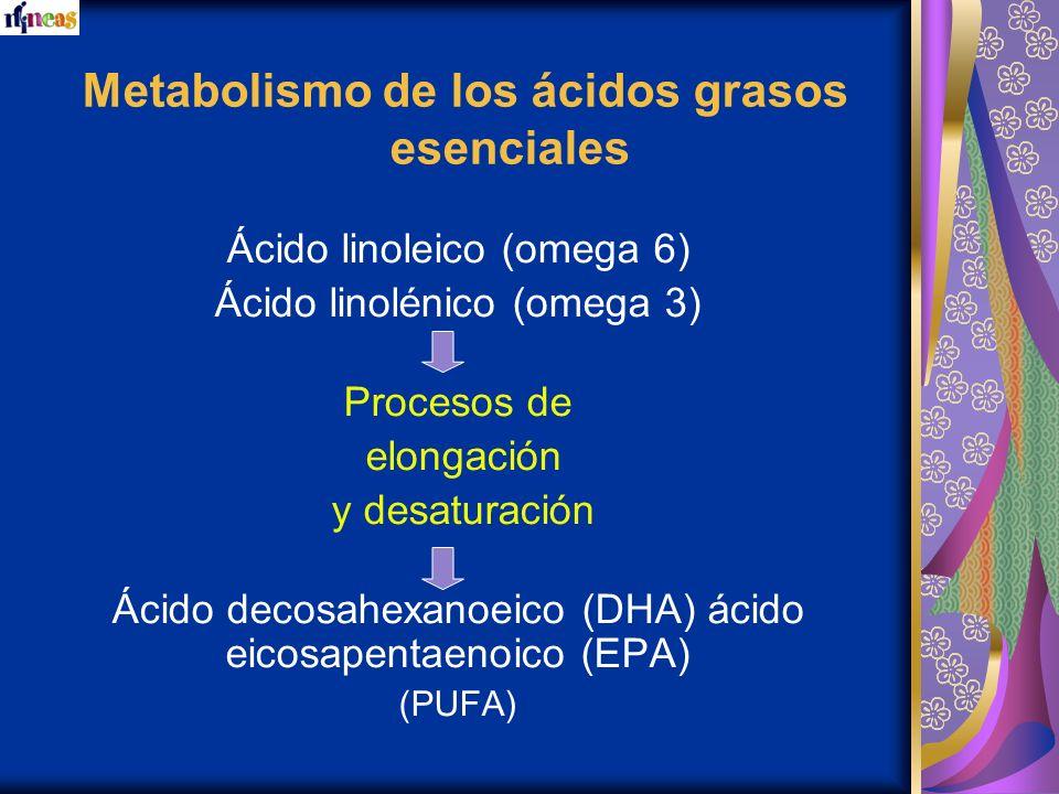 Metabolismo de los ácidos grasos esenciales Ácido linoleico (omega 6) Ácido linolénico (omega 3) Procesos de elongación y desaturación Ácido decosahex