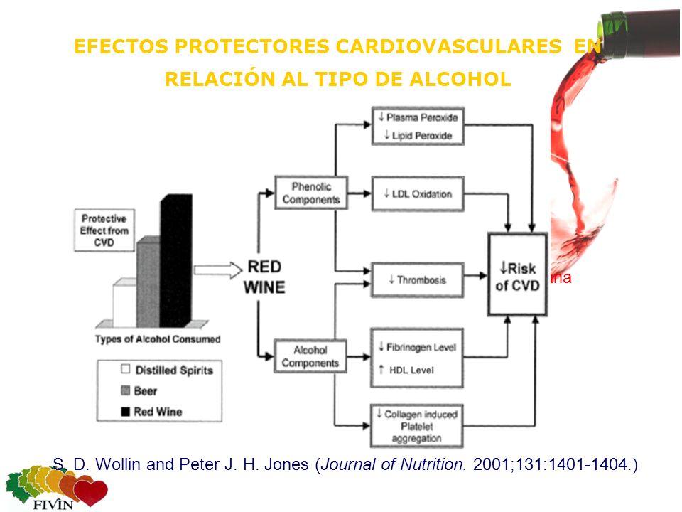 EFECTOS PROTECTORES CARDIOVASCULARES EN RELACIÓN AL TIPO DE ALCOHOL Consumo regular-diario No acumular el consumo de una semana en el fin de semana S.