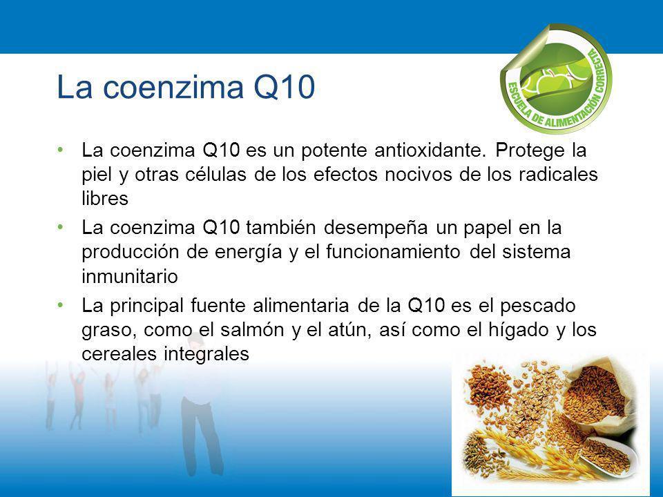 La coenzima Q10 La coenzima Q10 es un potente antioxidante. Protege la piel y otras células de los efectos nocivos de los radicales libres La coenzima