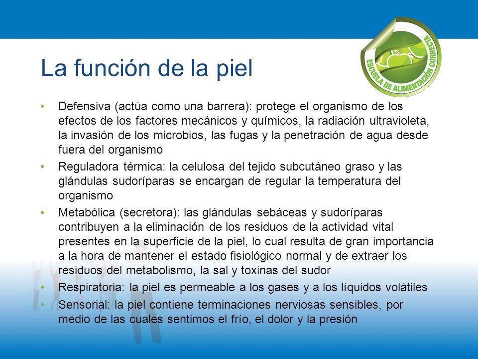 La función de la piel Defensiva (actúa como una barrera): protege el organismo de los efectos de los factores mecánicos y químicos, la radiación ultra