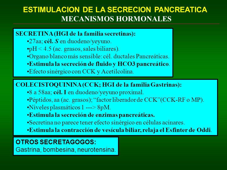 ESTIMULACION DE LA SECRECION PANCREATICA MECANISMOS HORMONALES SECRETINA (HGI de la familia secretinas): 27aa; cél. S en duodeno/yeyuno. pH < 4.5 (ac.