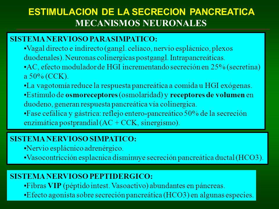 ESTIMULACION DE LA SECRECION PANCREATICA MECANISMOS NEURONALES SISTEMA NERVIOSO PARASIMPATICO: Vagal directo e indirecto (gangl. celíaco, nervio esplá