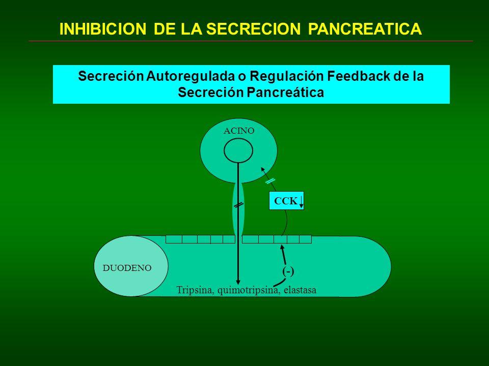 INHIBICION DE LA SECRECION PANCREATICA Secreción Autoregulada o Regulación Feedback de la Secreción Pancreática Tripsina, quimotripsina, elastasa CCK