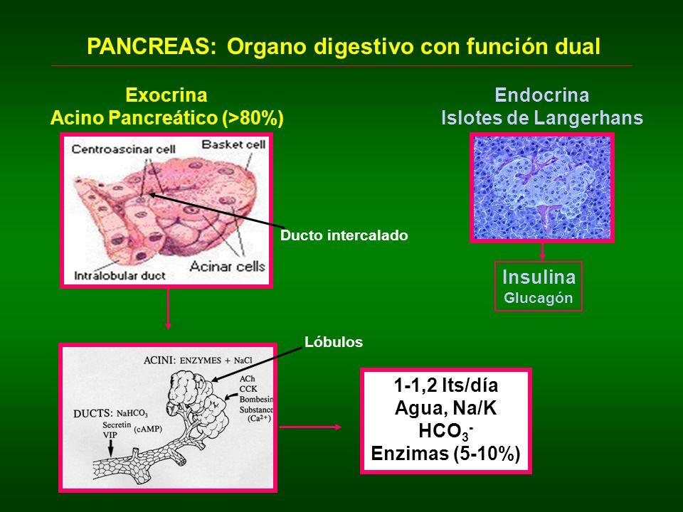 COMPOSICION Y FUNCION DE LA SECRECION PANCREATICA 2.- Bicarbonato o componente acuoso: Neutralizar el ácido gástrico.