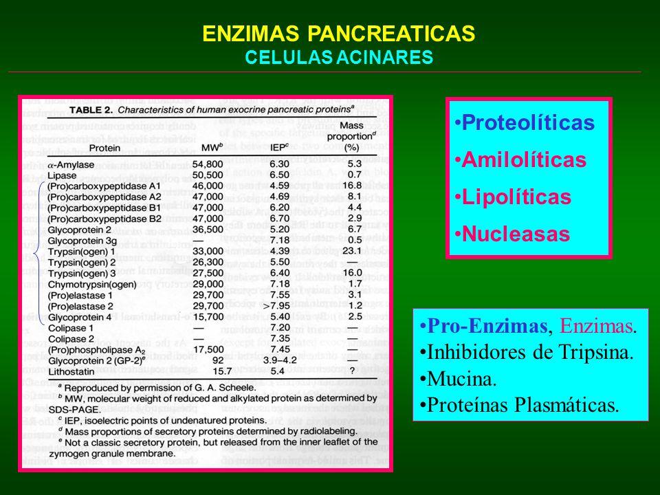 ENZIMAS PANCREATICAS CELULAS ACINARES Proteolíticas Amilolíticas Lipolíticas Nucleasas Pro-Enzimas, Enzimas. Inhibidores de Tripsina. Mucina. Proteína