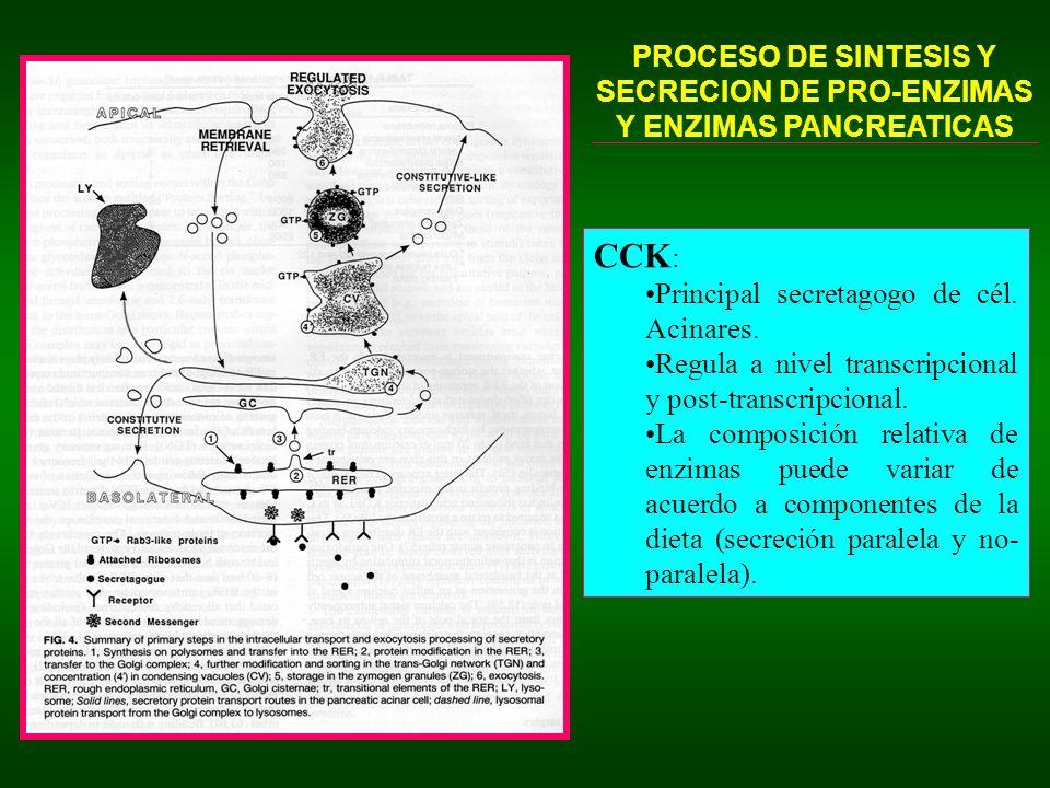 CASCADA DE ACTIVACION ENTERICA (EN EL LUMEN DUODENAL) DE ENZIMAS PANCREATICAS EXOCRINAS ENTEROCITOS