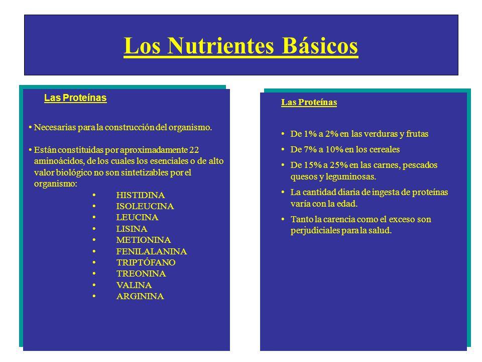 Las Proteínas Necesarias para la construcción del organismo. Están constituidas por aproximadamente 22 aminoácidos, de los cuales los esenciales o de