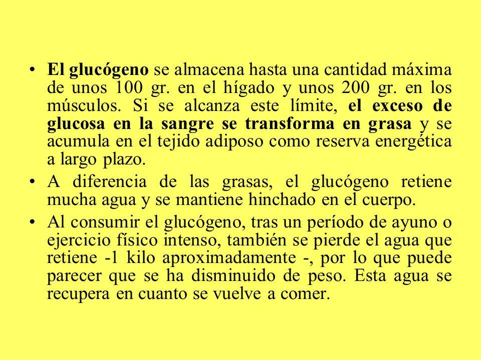 El glucógeno se almacena hasta una cantidad máxima de unos 100 gr. en el hígado y unos 200 gr. en los músculos. Si se alcanza este límite, el exceso d