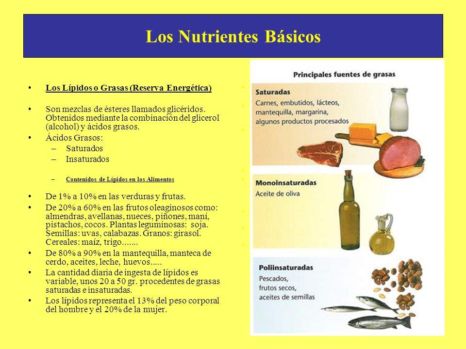 Los Nutrientes Básicos Los Lípidos o Grasas (Reserva Energética) Son mezclas de ésteres llamados glicéridos. Obtenidos mediante la combinación del gli