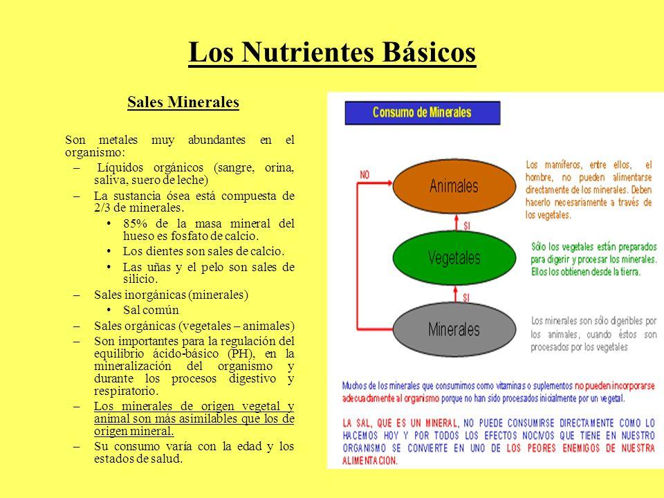 Los Nutrientes Básicos Sales Minerales Son metales muy abundantes en el organismo: – Líquidos orgánicos (sangre, orina, saliva, suero de leche) –La su