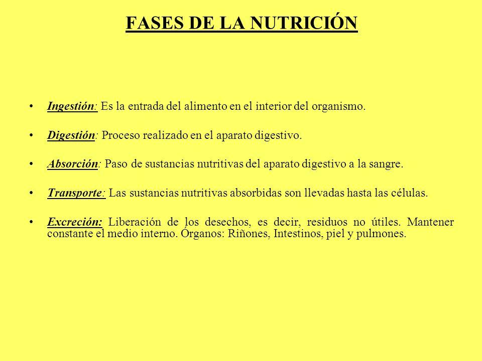 FASES DE LA NUTRICIÓN Ingestión: Es la entrada del alimento en el interior del organismo. Digestión: Proceso realizado en el aparato digestivo. Absorc