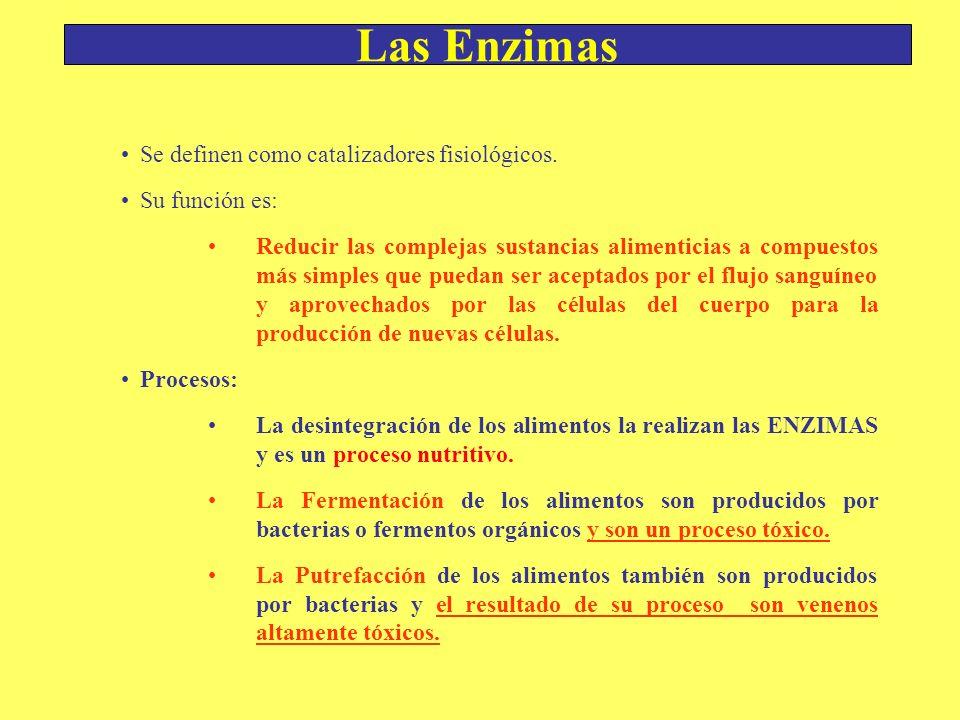 Las Enzimas Se definen como catalizadores fisiológicos. Su función es: Reducir las complejas sustancias alimenticias a compuestos más simples que pued