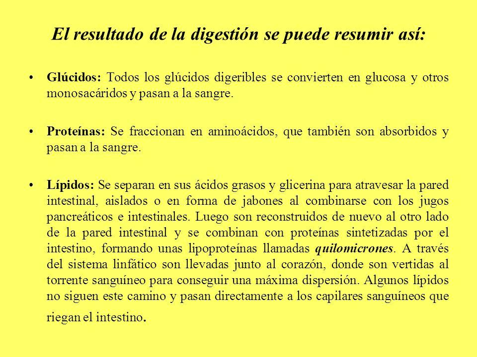 El resultado de la digestión se puede resumir así: Glúcidos: Todos los glúcidos digeribles se convierten en glucosa y otros monosacáridos y pasan a la