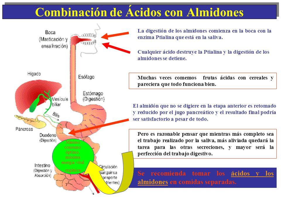 Combinación de Ácidos con Almidones La digestión de los almidones comienza en la boca con la enzima Ptialina que está en la saliva. El almidón que no