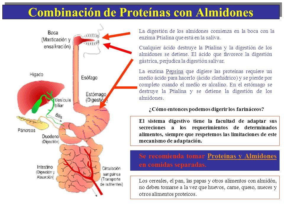 Combinación de Proteínas con Almidones La digestión de los almidones comienza en la boca con la enzima Ptialina que está en la saliva. ¿Cómo entonces
