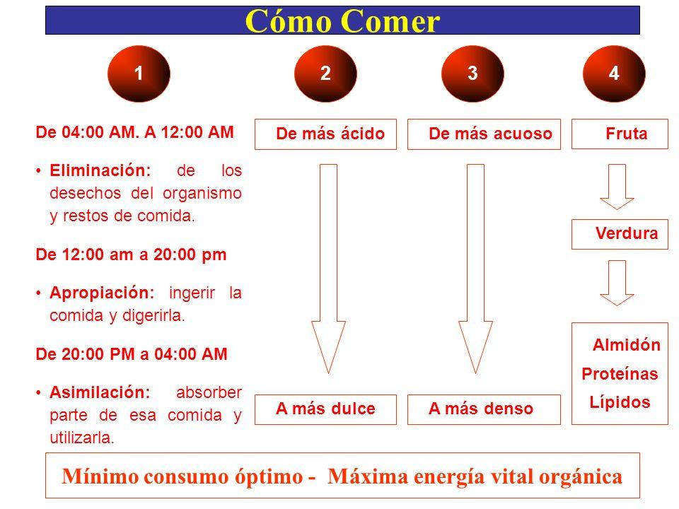 Cómo Comer De 04:00 AM. A 12:00 AM Eliminación: de los desechos del organismo y restos de comida. De 12:00 am a 20:00 pm Apropiación: ingerir la comid
