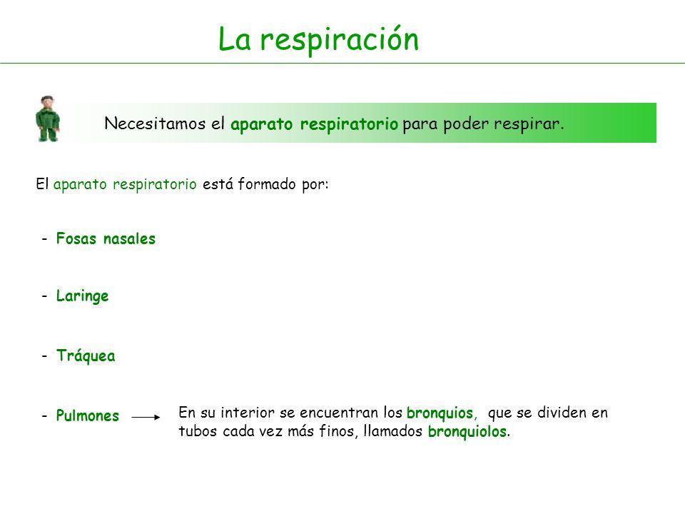 La respiración Necesitamos el aparato respiratorio para poder respirar. El aparato respiratorio está formado por: - Fosas nasales - Laringe - Tráquea