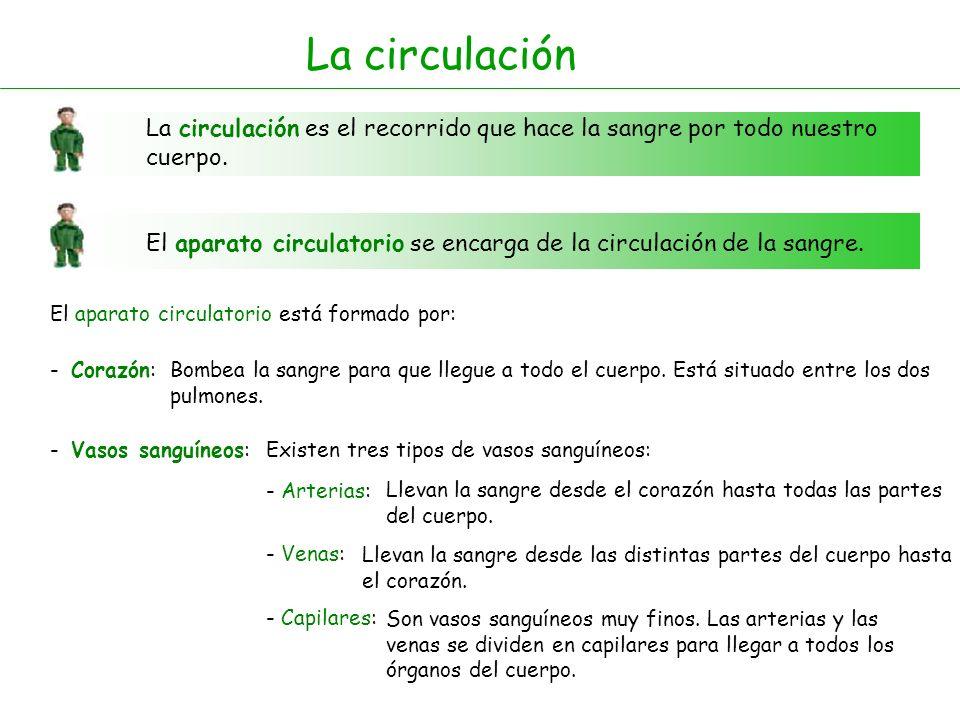 La circulación La circulación es el recorrido que hace la sangre por todo nuestro cuerpo. El aparato circulatorio se encarga de la circulación de la s