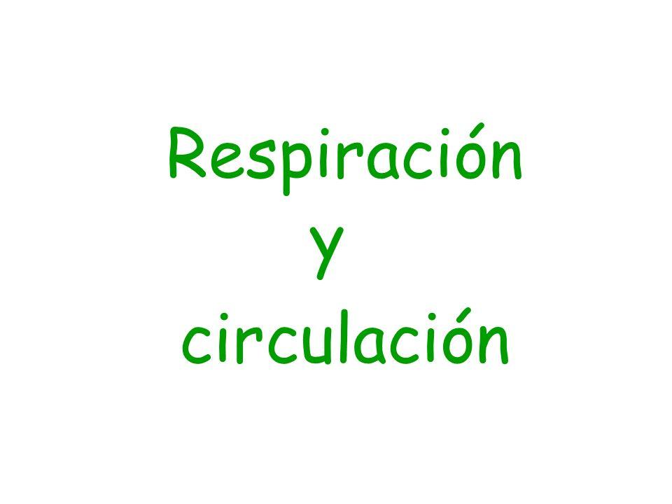 La respiración Necesitamos el aparato respiratorio para poder respirar.