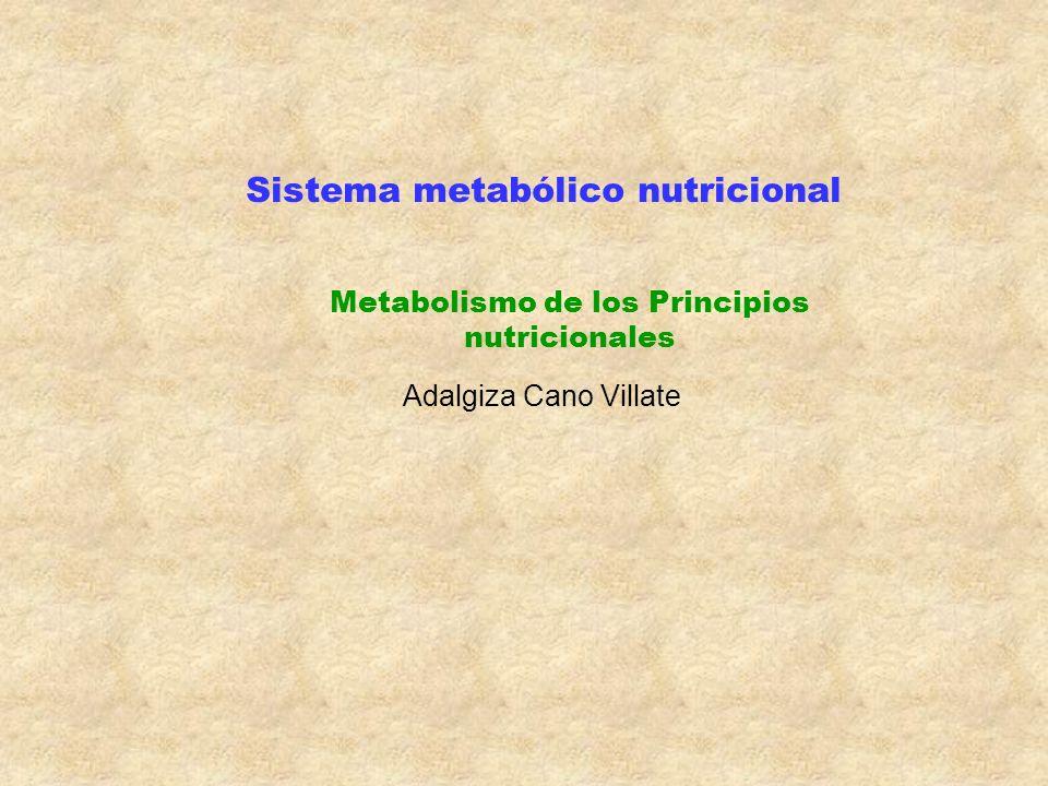 Sistema metabólico nutricional Metabolismo de los Principios nutricionales Adalgiza Cano Villate