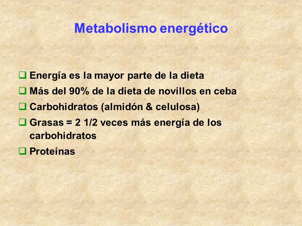 Metabolismo energético Energía es la mayor parte de la dieta Más del 90% de la dieta de novillos en ceba Carbohidratos (almidón & celulosa) Grasas = 2