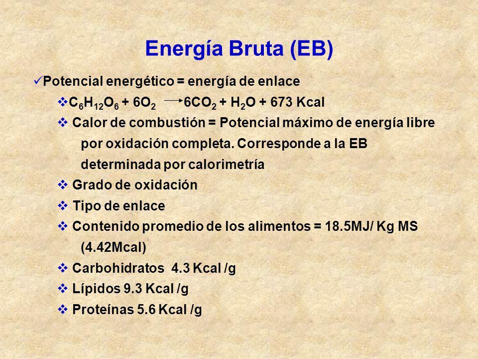 Energía Bruta (EB) Potencial energético = energía de enlace C 6 H 12 O 6 + 6O 2 6CO 2 + H 2 O + 673 Kcal Calor de combustión = Potencial máximo de ene