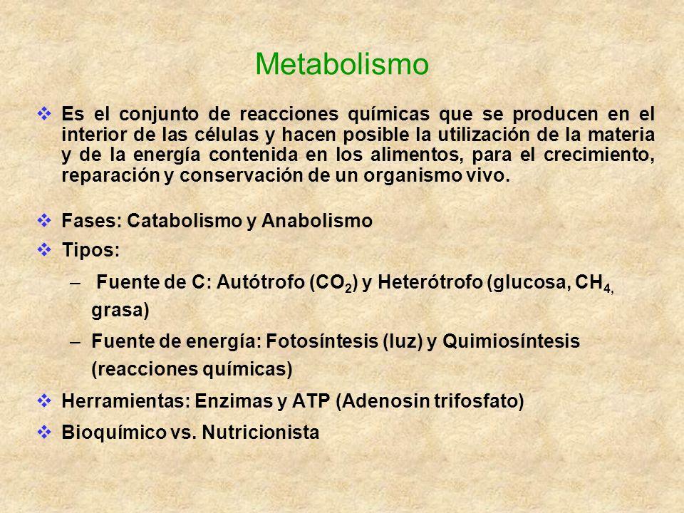 Energía de los nutrientes Energía es la capacidad de trabajo Unidades de energía: caloria (cal) y Julio (J) 1 cal = 4.184 J Tipos de reacciones Endergonicas: el sistema gana energía Exergónicas: el sistema pierde energía Almacenamiento de la energía ATP produce 52kJ/mol = 12.43Kcal/mol Fosfocreatina muscular Creatina + ATP Creatinina quinasa Fosfocreatina Tejido adiposo (grasa) y Hígado y músculos (glucógeno)