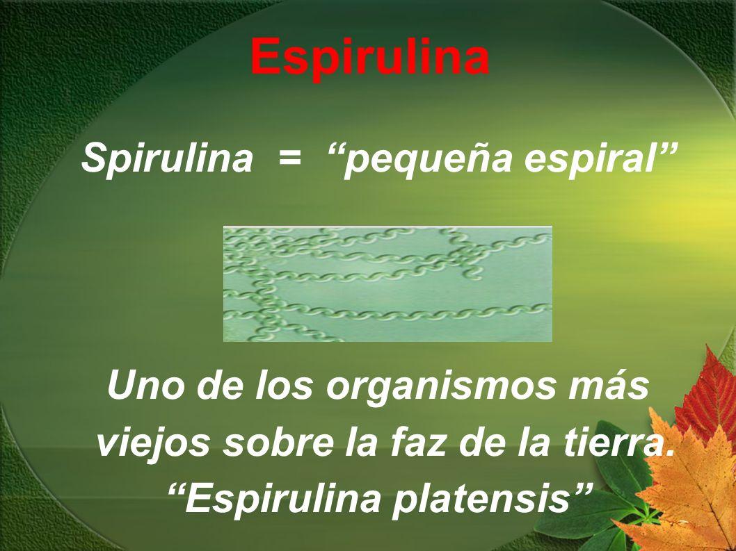 Espirulina Spirulina = pequeña espiral Uno de los organismos más viejos sobre la faz de la tierra. Espirulina platensis